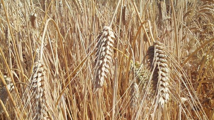 Le versement des aides bio 2018 a démarré le 27 mars 2019 selon le ministère de l'agriculture.
