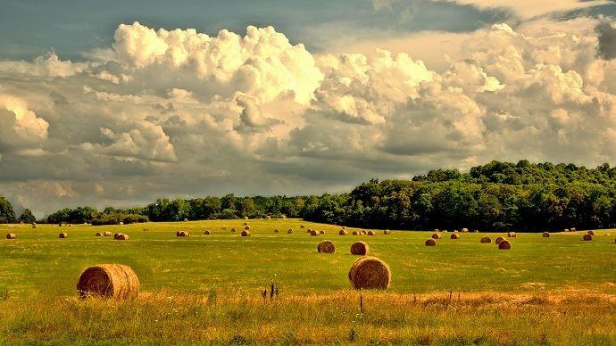 Foin dans prairie