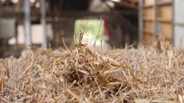 Unséchoir en grange pour produire du lait de foin avec des vaches Fleckvieh