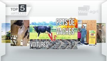 La sortie de Nagui contre l'élevage bovin interpelle les lecteurs de Web-agri