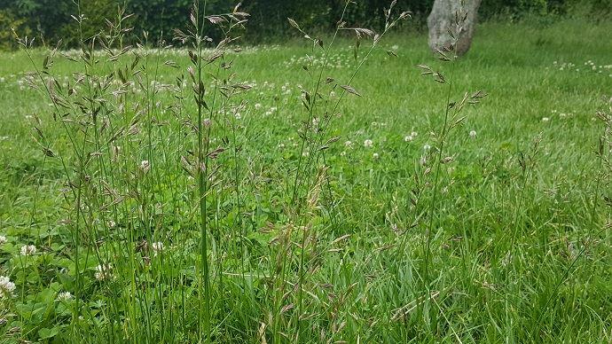 Le report d'herbe sur pied permet d'allonger la saison de pâturage en période estivale