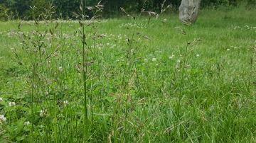 Si les stocks d'herbe sont suffisants, pensez au report sur pied