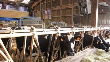 Comment limiter l'impact du stress thermique sur les bovins?