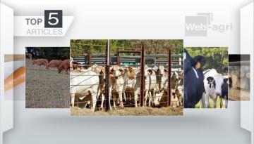 Les trois sujets phares: accord UE-Mercosur, les parasites et le marché bovin