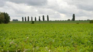 Tous les prix des terres agricoles des Hauts-de-France en 2018