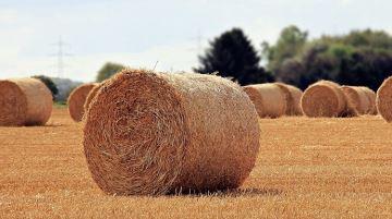 Tous les prix 2018 des terres agricoles libres et occupées de Nouvelle-Aquitaine