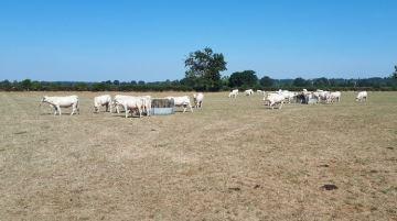 Le gouvernement sonne la mobilisation pour aider les agriculteurs