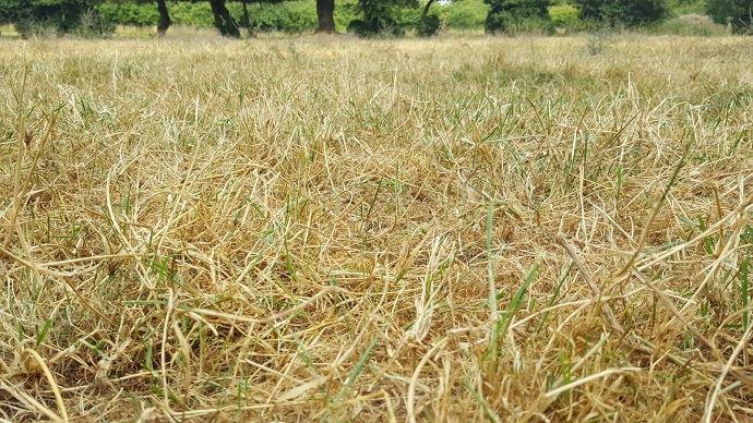 Avec la sécheresse, les prairies sont fortement dégradées. En revanche, les conditions sont favorables au sursemis.