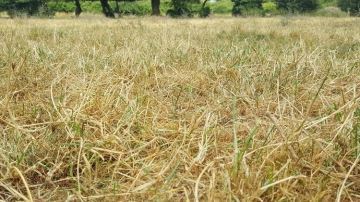 Les agriculteurs touchés seront exonérés d'une partie de la taxe foncière