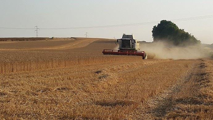 Des rendements en blé 2019 bien supérieurs qu'en 2018 chez les éleveurs comme chez les céréaliers.