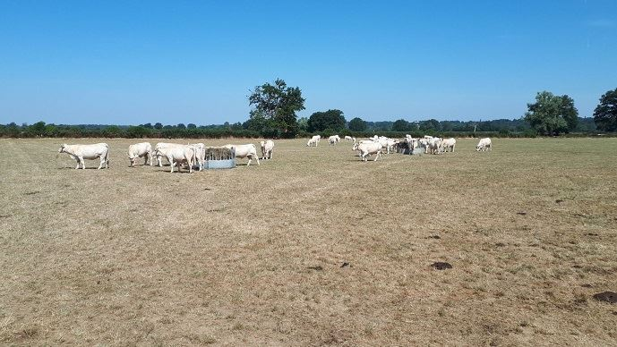 Dans la Nièvre, Stéphane Aurousseau, éleveur de charolaises, craint, comme Emmanuel Ferrand, une sécheresse sans précédent