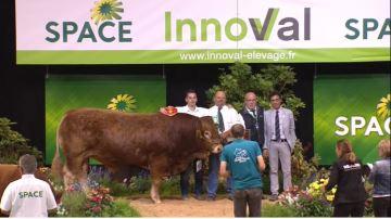 Nectar et Hotesse s'imposent dans le concours interrégional Limousin