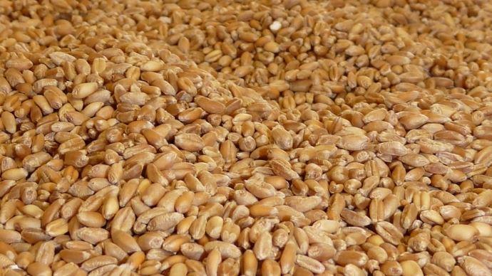 Selon agritel, la campagne 2019-2020 démarre avec un marché du blé plus équilibré que lors des campagnes précédentes.