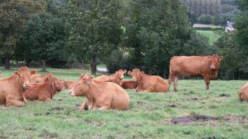 Le Brexit impactera-t-il la filière viande bovine?