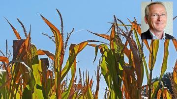 «En 2050, seulement six jours maximum pour récolter le maïs au bon stade»