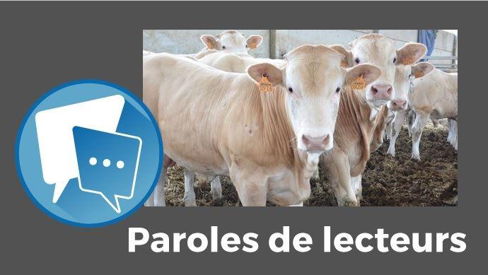 paroles de lecteurs web agris installer en bovins viande