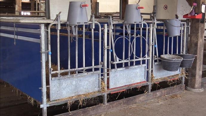 Cases à veaux sur rail au dessus d'un racleur