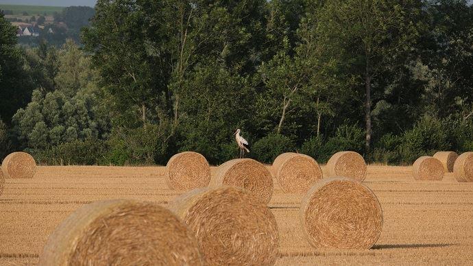 La politique agricole foncière est un atout en maitère de compétitivité, juge Agriculture Stratégies