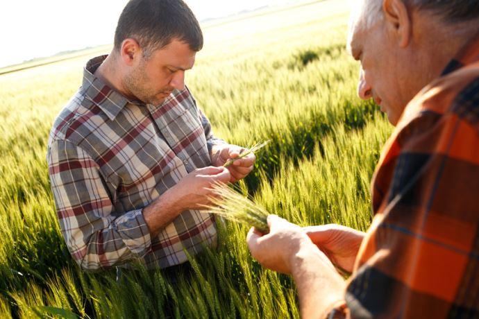 deux agriculteurs observant un champ de cereales