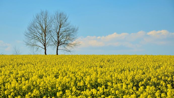 La production de biocarburants d'origine française doit être encouragée, estiment les députés de la mission d'information sur les agrocarburants
