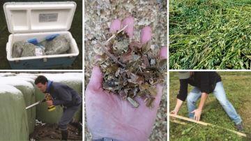Herbe, ensilage, enrubannage, foin: comment prélever un bon échantillon?