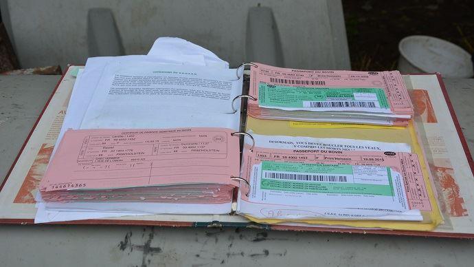 Chez les bovins, la carte rose est le passeport de l'animal tandis que la carte verte fait plutôt office de carnet de santé obligatoire pour vendre l'animal.