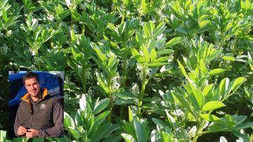 Cyprien Thierry (45) teste la féverole, moins gourmande en phytos que le colza