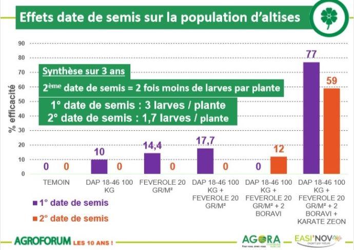 Effet de la date de semis sur la population d'altises