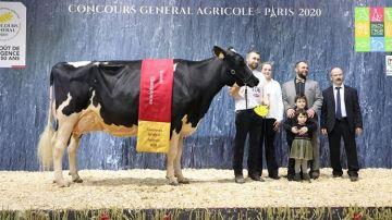 Du bon vent Janna Cama s'offre le titre de grande championne Holstein à Paris