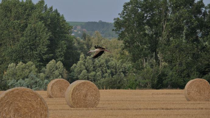 La Confédération paysanne invite, à la lumière de la crise, à repenser un modèle agricole plus durable