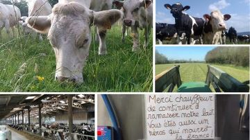 Aux champs et dans les vaches, le boulot se poursuit (non sans inquiétudes...)