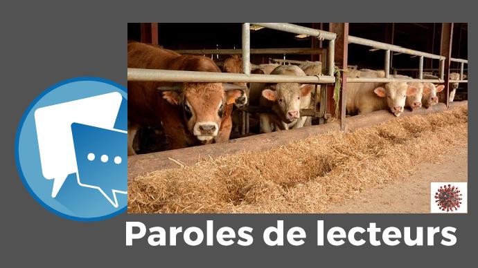 paroles de lecteurs web agri covid 19 retention de bovins viande en ferme