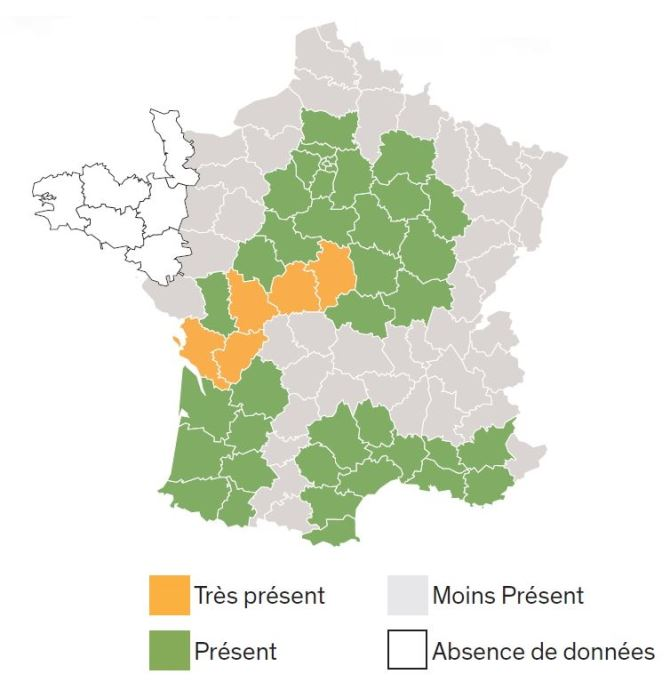 Carte de répartition du chardon marie