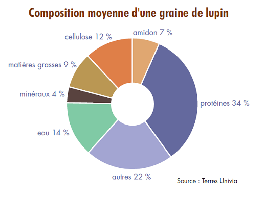 Composition moyenne d'une graine de lupin
