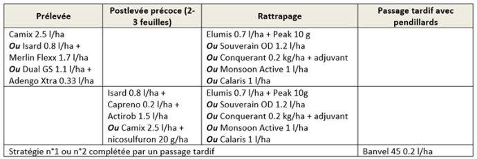 Exemples de stratégies herbicides pour lutter contre le datura dans le maïs