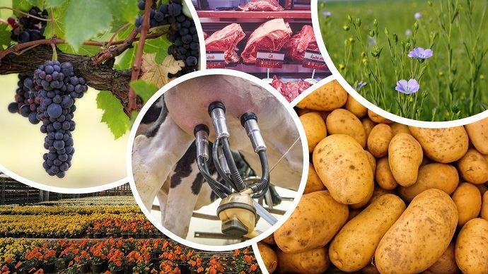 Pommes de terre, lin, lait, viande, viticulture et horticulture