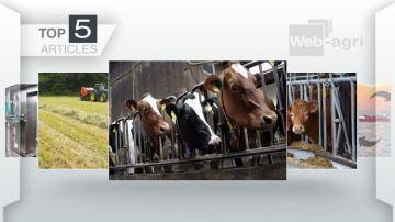 Corn gluten feed, conjoncture viande bovine et accord UE/Mexique à la Une