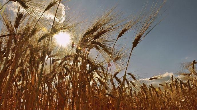 Soleil dans un champ