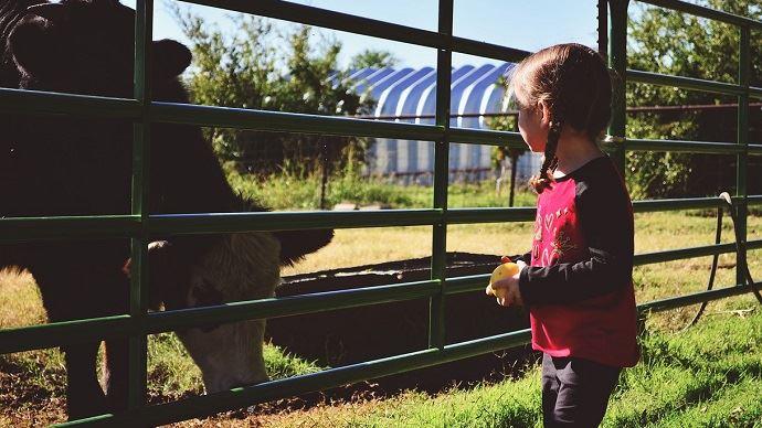 Enfant et bovins