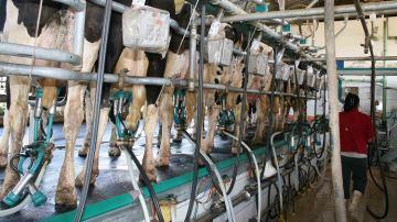 «La filière laitière souffre d'un déficit de transparence sur les prix»