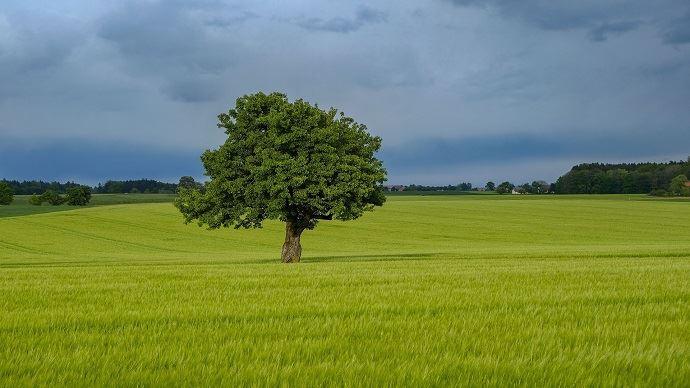 Les pluies arrivent trop tard en Europe