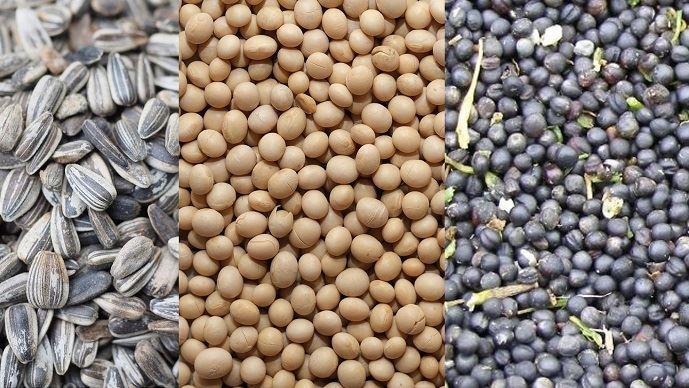 Le soja, le tournesol et le colza font partie des trois principaux oléagineux produits dans le monde.