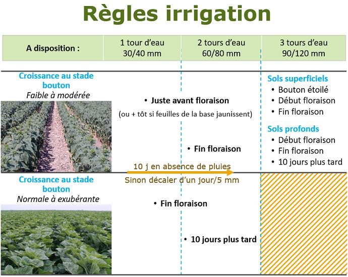 Les règles de décisions d'une stratégie d'irrigation à l'optimum