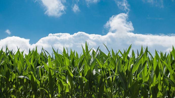 Pour l'OCDE et la FAO, les soutiens aux agriculteurs ont un impact négatif sur l'environnement, le fonctionnement des marchés et la résilience à long terme des agriculteurs