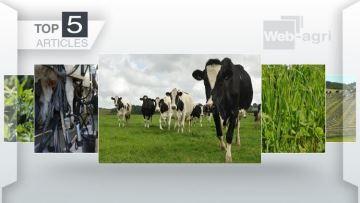 Systèmes laitiers herbagers, dérobées estivales et luzerne au c½ur de l'actu