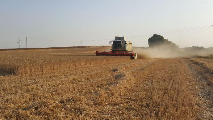 La production française de blé s'effondre en 2020