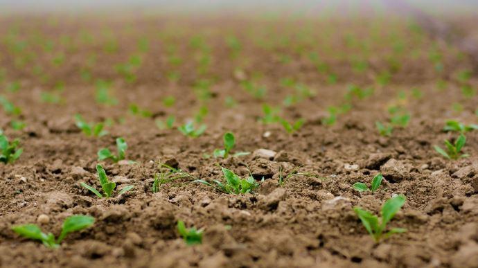 L'UFS a dressé le 8 juillet un premier bilan de la crise sur le secteur des semences