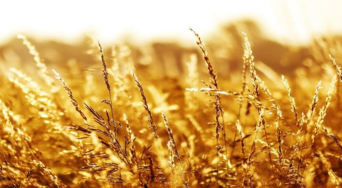 De bonnes pluies atteignent la Corn Belt