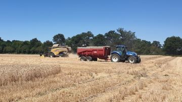 En blé, des rendements décevants par rapport à 2019 pour les éleveurs