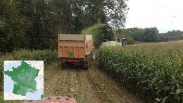 Les dernières estimations de rendements en maïs fourrage par département